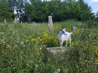 Еврейское кладбище в Богуславе