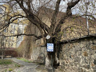 Шелковица Шевченко (в переулке Шевченко,8)